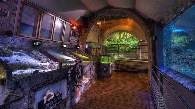 Les visiteurs ne se croiseront pas dans les petites allées de l'Aquarium du Limousin. / © Aquarium du Limousin