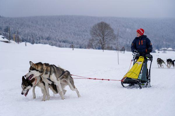 Pour réserver une balade en chiens de traîneau, mieux vaut réserver bien à l'avance. Même dans le massif du Jura.