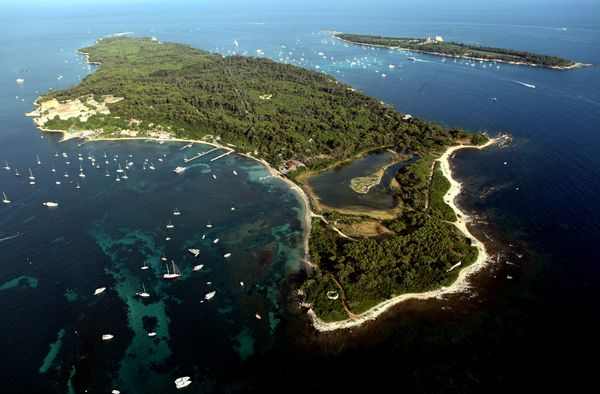 La posidonie au large de l'île sainte marguerite serait menacée.