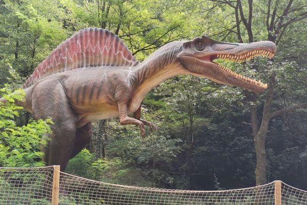Avec cinquante-cinq maquettes de dinosaures et dix hectares de parcours, Dinopedia est désormais le premier parc de France en termes de superficie et de nombre de sujets. - La Grand-Combe (Gard) - 24 août 2021.