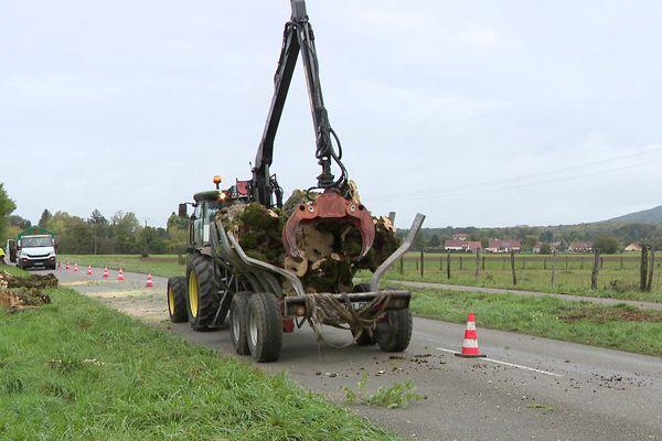 L'extraction des arbres devrait se terminer la semaine prochaine